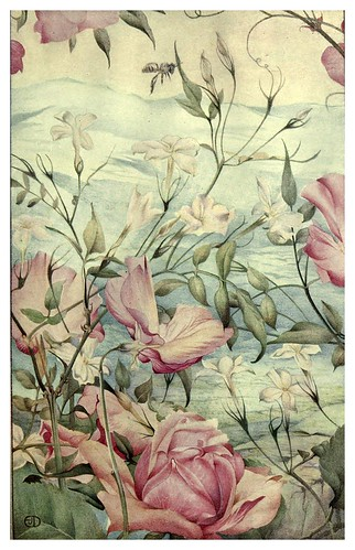 048-Jazmines-News of spring and other nature studies 1917- Ilustrado por Edward J. Detmold