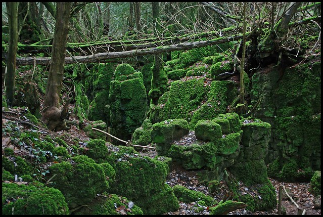 Download this Puzzlewood The Forest Dean picture