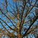 Faded tree at Stiva Industrial Park