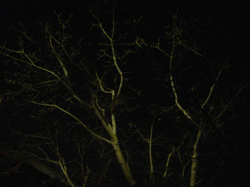 Trees at Night _ 9268