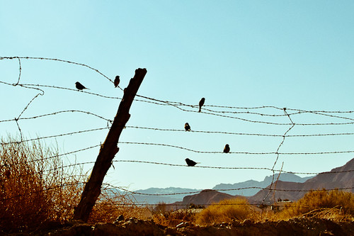birds on a wire {357/365}