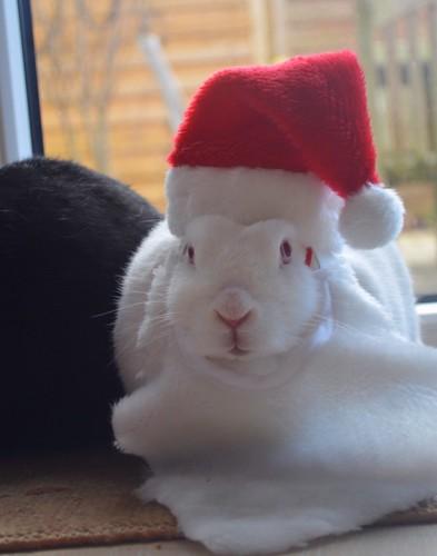 Der Weihnachtsmann muss viel zutun haben wenn er nun schon Helfer auf vier Pfoten schickt.