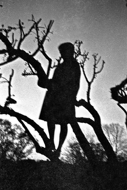Broot climbs a tree in the Fenway, spring 1963
