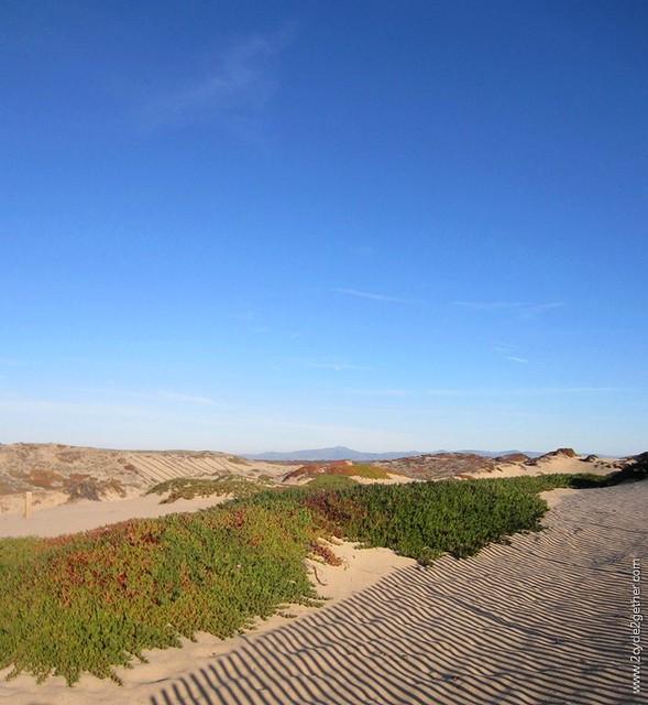 Marina Dunes