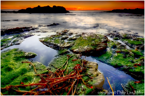 seascape landscape nikon sunsets tidepools hdr pacificcoast ptlobosstatereserve longexpsoures kelpbeds topazclean d7000 singhrayndfilters galleryoffantasticshots trueexcellence1
