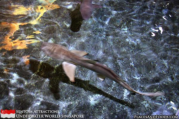 sentosa-underwater-world-1