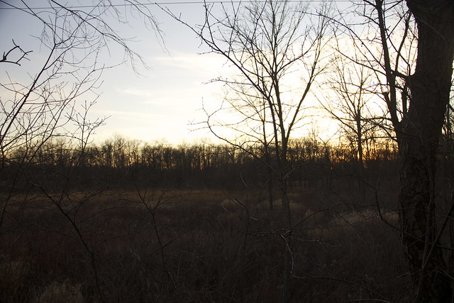 Lincoln Marsh, Early January 2012