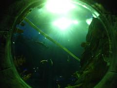 Ocean Park Grand Aquarium Bubble Window