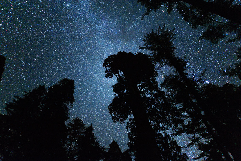 Milky Way through the Grant Grove