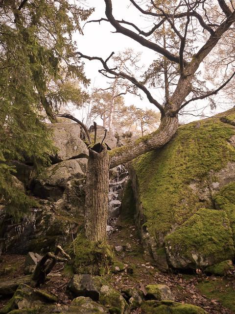 Ett träd med armbåge