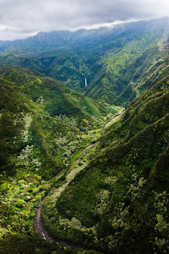 Kauai Rainforest