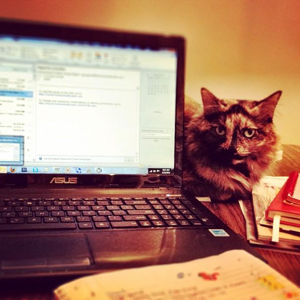 #cats #laptop