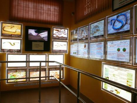 Guindy-Chennai-Snake-Park-03