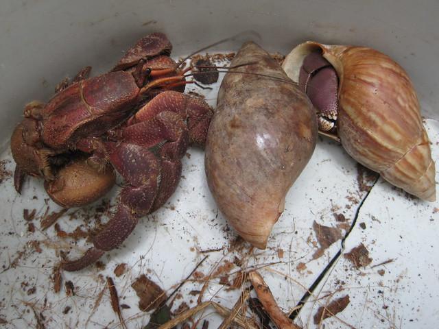 Umang | Hermit Crabs