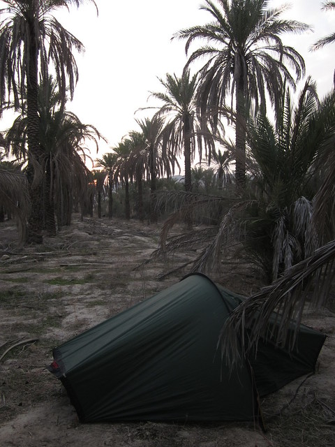 camping in the palms