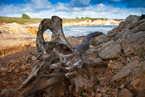 Esquelet de llenya by Migue Pons Cunill