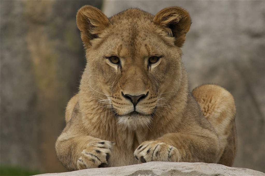 Queen of her jungle, Mekita