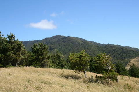 Looking up to Mt Wainui