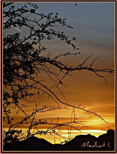 trees sunset orange desert lasvegas medhathi ringexcellence dblringexcellence tplringexcellence