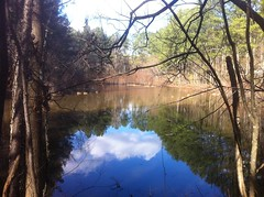 Wells Tract Pond