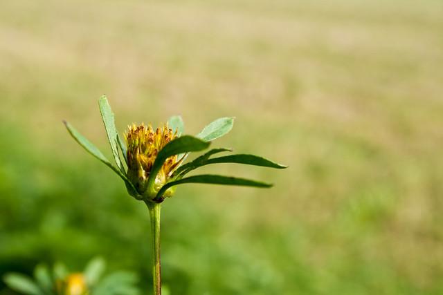 * _wild flower