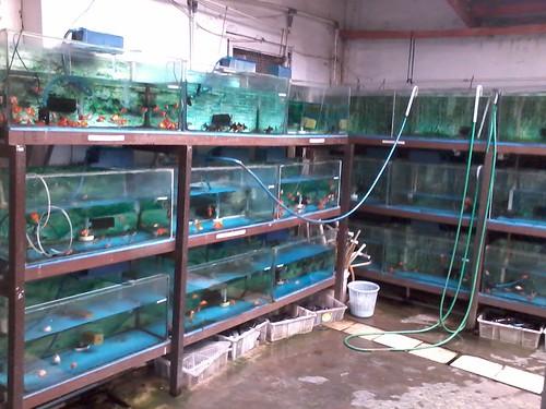 ¤ a Little Notes ¤: Punya Aquarium Lagi