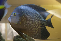 fish-tank-aquarium-custom-installed-bradenton-sarasota-florida-3