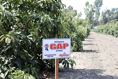 "A GAP certified farm field.  ""Consumers expect that the produce they consume is safe to eat.  That process starts in the fields and groves...""  Photo and quote provided by Mission Produce."
