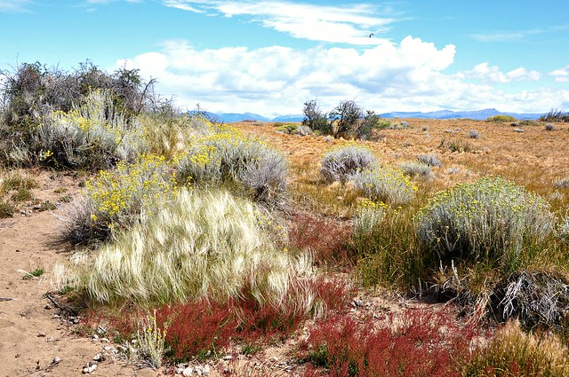 Patagonian tones Laguna Nimez