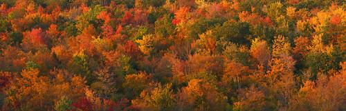 autumn ny fall composite forest fallcolors vestal hugin jonespark