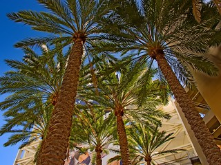 Palm Trees & Baseball