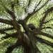 Angel Oak by Fiona Keyes