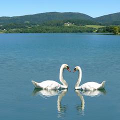 Romance at Swan Lake