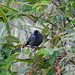 Gray Catbird by KyleCare 