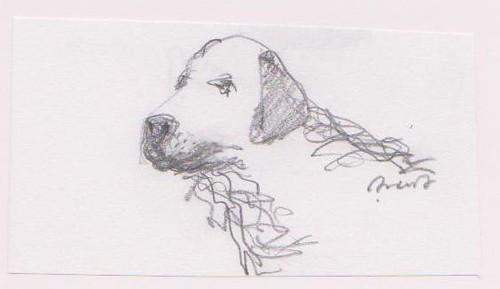 Perro guía - Guide dog