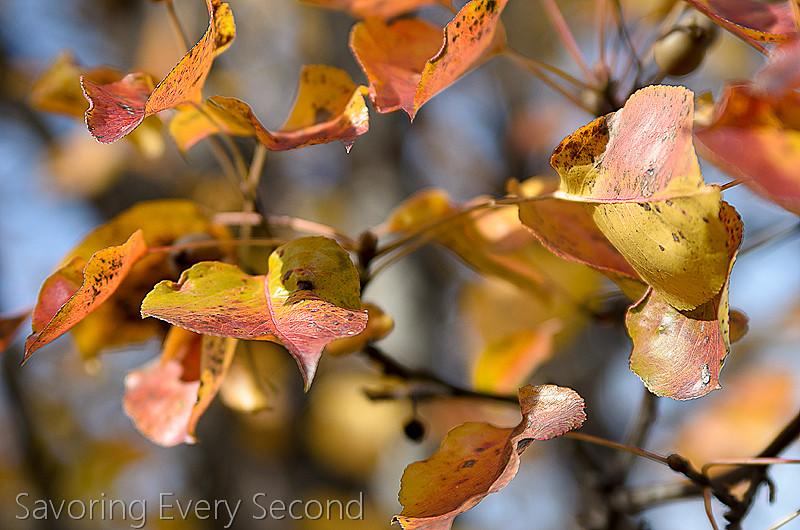 Fall Leaves32-Edit.jpg
