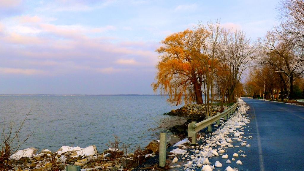 Orange Tree by the Lake