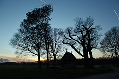 Oldest tree of Twente