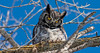 Great Horned Owl [Remastered]
