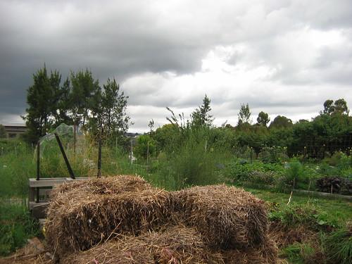 Rainy days community garden