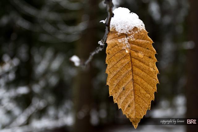 snow_cap