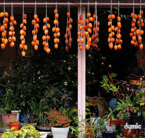 kaki (persimmon) hanging to dry in front a Kyoto house.