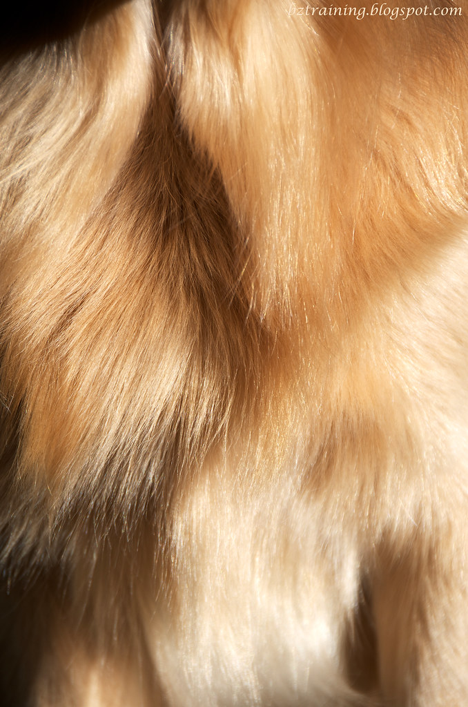 Just Fur