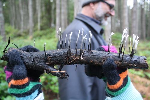 fungi hunter