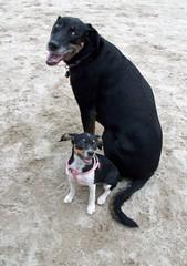 DogPark_LolaRosie_82111c