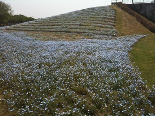 丘に咲く紫の花