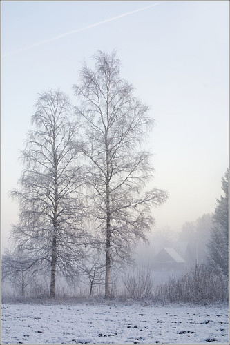 20120101. First day of the New Year. The fog. 1374. by Tiina Gill