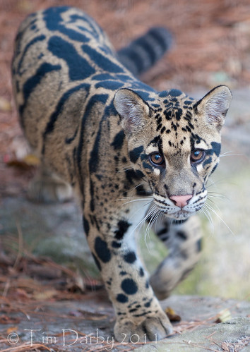 2011-12-26 - Zoo-753