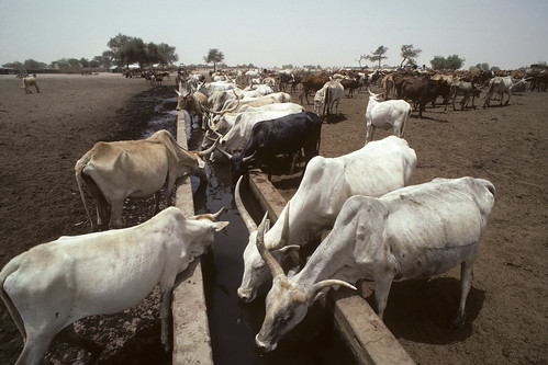 Minimize Methane from Livestock