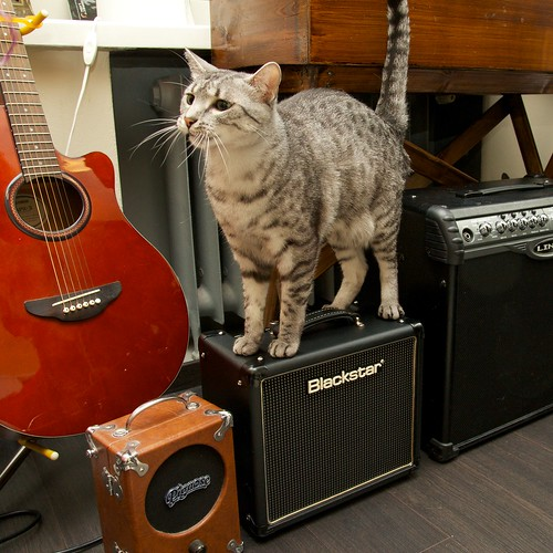 Flippi: Cats on amps